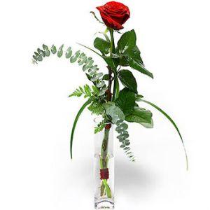 Flower Delivery Japan on Regala Una Prestigiosa Rosa Rossa Dal Gambo Lungo Con Verde Di
