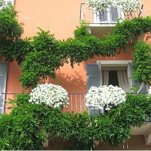 Consegna piante per il balcone for Piante per terrazzi