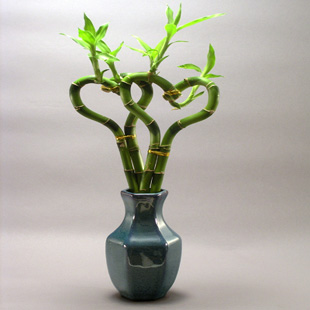 Consegna piante da appartamento for Piante e fiori da appartamento