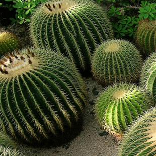 pianta-cactus.jpg (310×310)